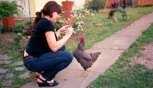 chickens treats supplements