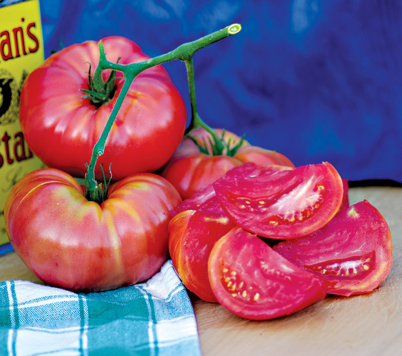 mortgage lifter heirloom tomatoes starts seeds
