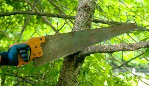 hand wood saw heirlooms farm tools
