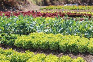 gardening off the grid