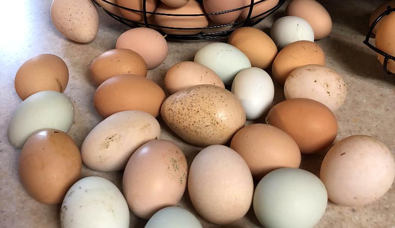 surplus freezing freeze eggs