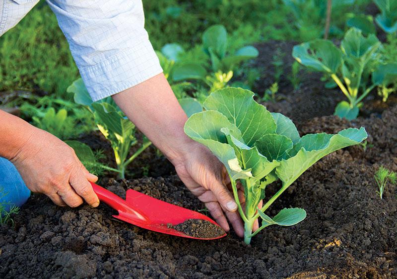 starts plants garden