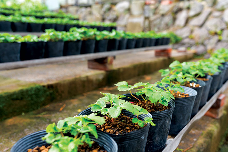 starts plants