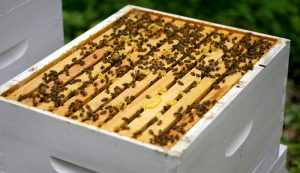 bees hive split