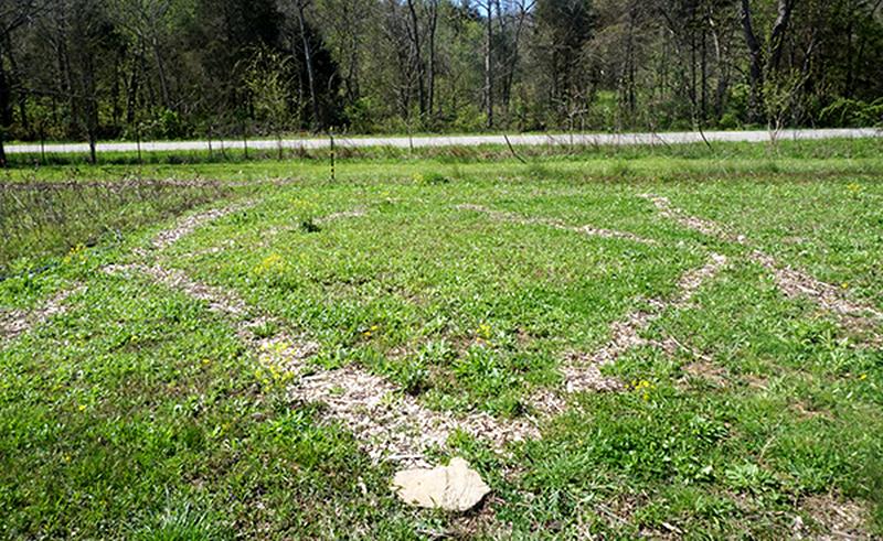 weeds weed cutter garden
