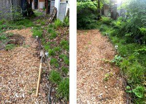 garden path pathway