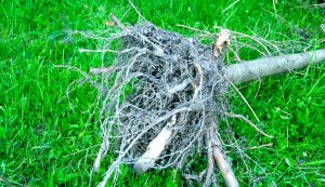 tree stump roots removal