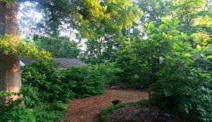 garden path wood chip mulch
