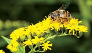 help bees beekeeper