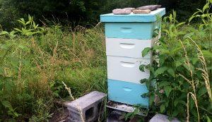 bees swarm beehive