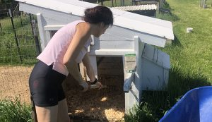 chicken coop odor control