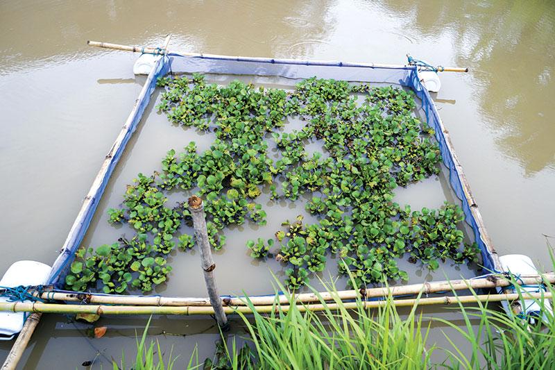 fish aquaculture cage