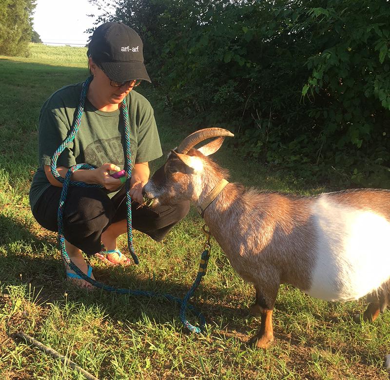 goats clicker training