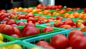 tomatoes marketing