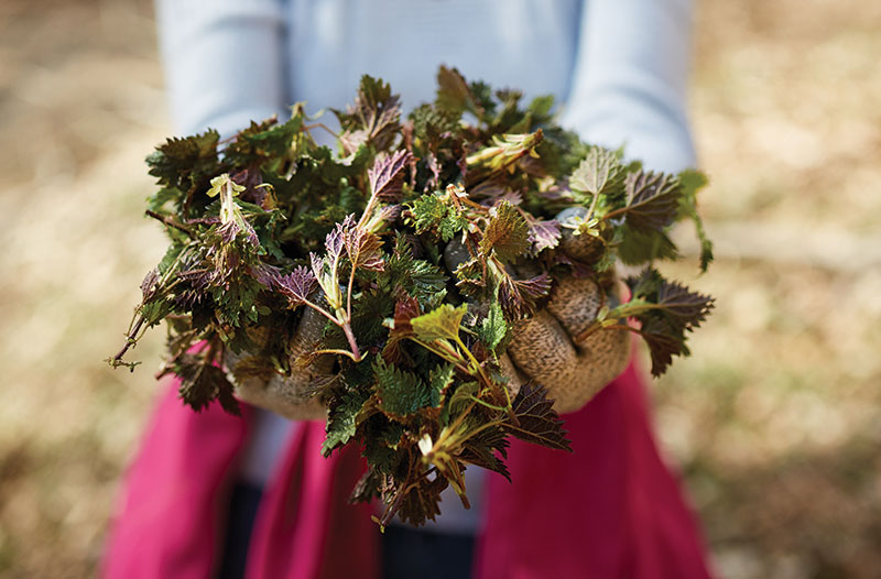 food trends foraging wild