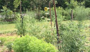 mid-summer garden