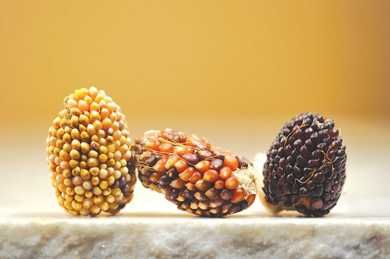 popcorn indian berries