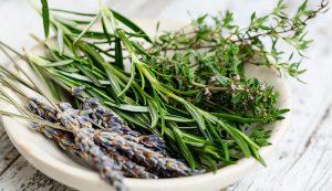 herbs herb garden gardening