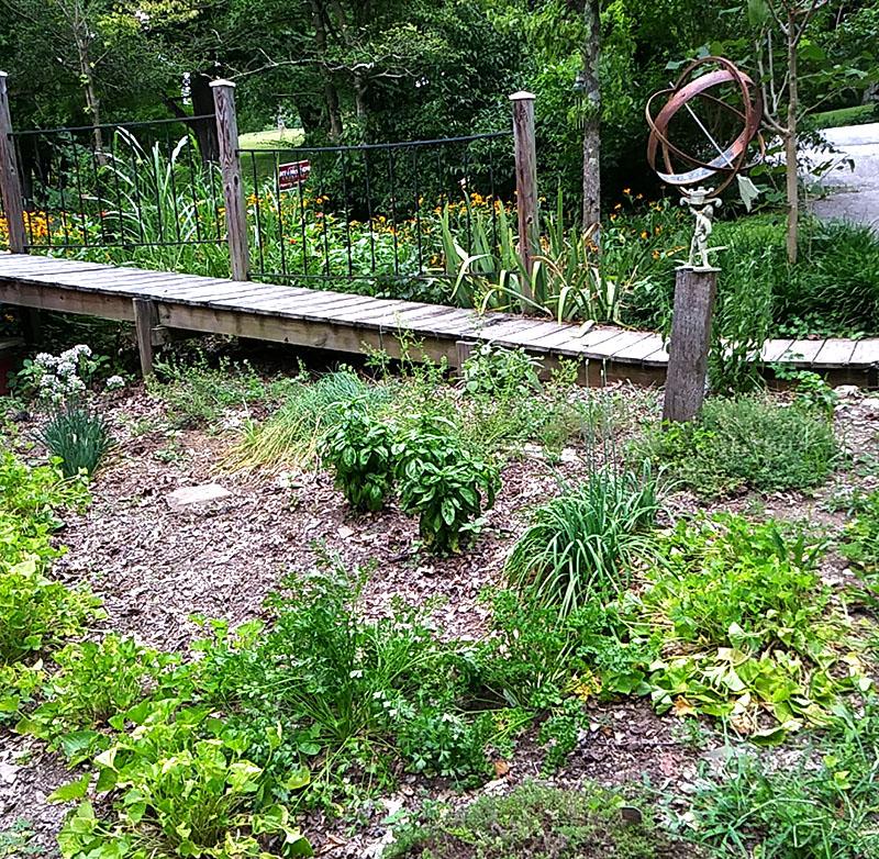 kitchen herbs herb garden gardening