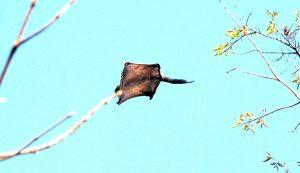 flying squirrel squirrels