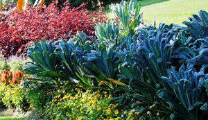 fall garden kale basil pepper