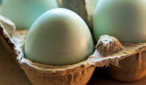 store eggs storage