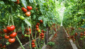 investment market farm business