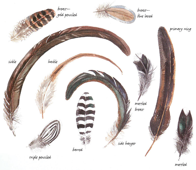 chicken feathers feather patterns