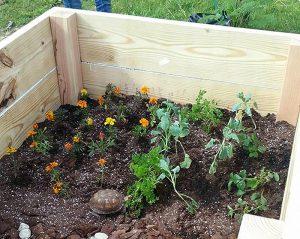 wildlife rehab rehabilitation turtle garden