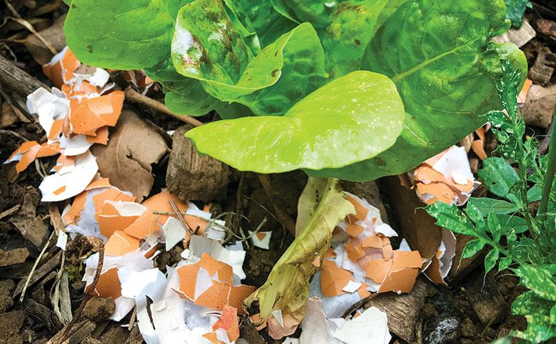soil amendments eggshells