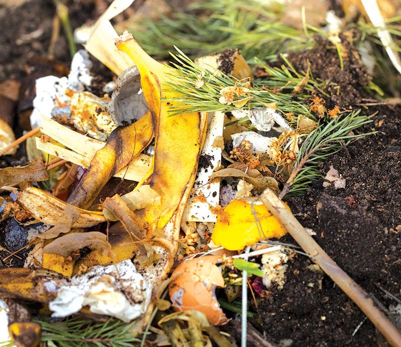 soil amendments banana peels