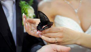 butterfly farming butterflies