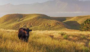 livestock farm euthanasia