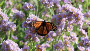 late-season butterfly flowers