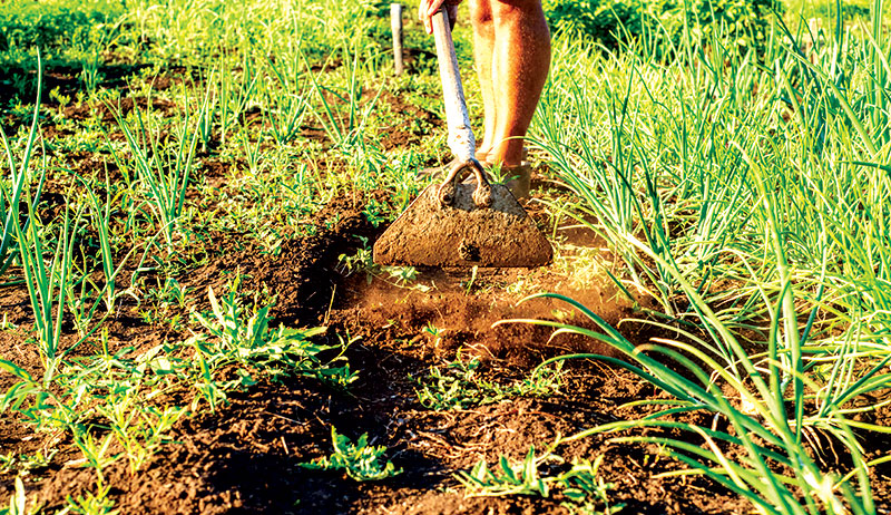 dry farming irrigation weeds