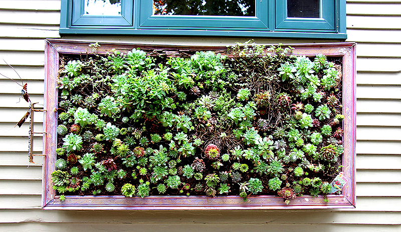 fall succulent projects frame