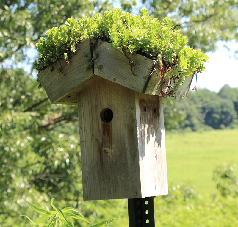 fall succulent projects green-roof birdhouse