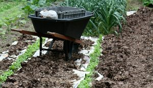 fall weed control tips