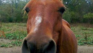livestock photos horse