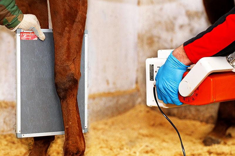 livestock horse x-ray x-rays