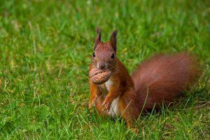 squirrel nut nuts mast year
