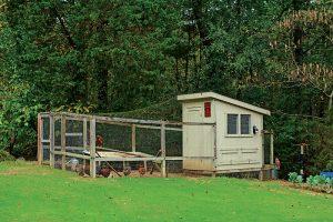 coop henhouse chicken health chickens