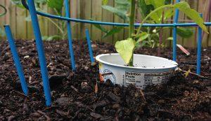 pest barriers gardens gardening