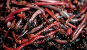 worm farmer's handbook review book worms