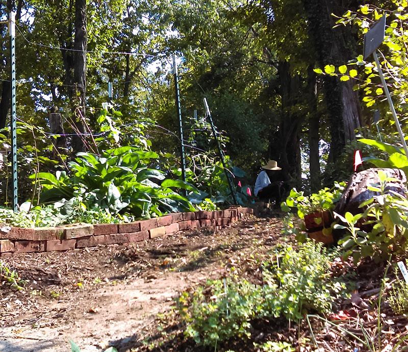 gratitude community garden gardens