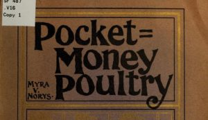 pocket money poultry