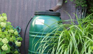 rain barrel garden gardening