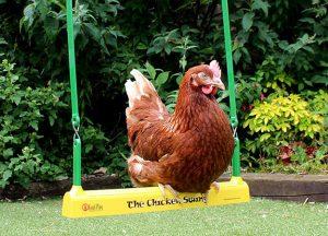 fowl play chicken swing