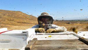 beekeeper beekeeping bees