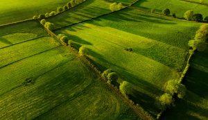 no-till garden scratch pasture field grass